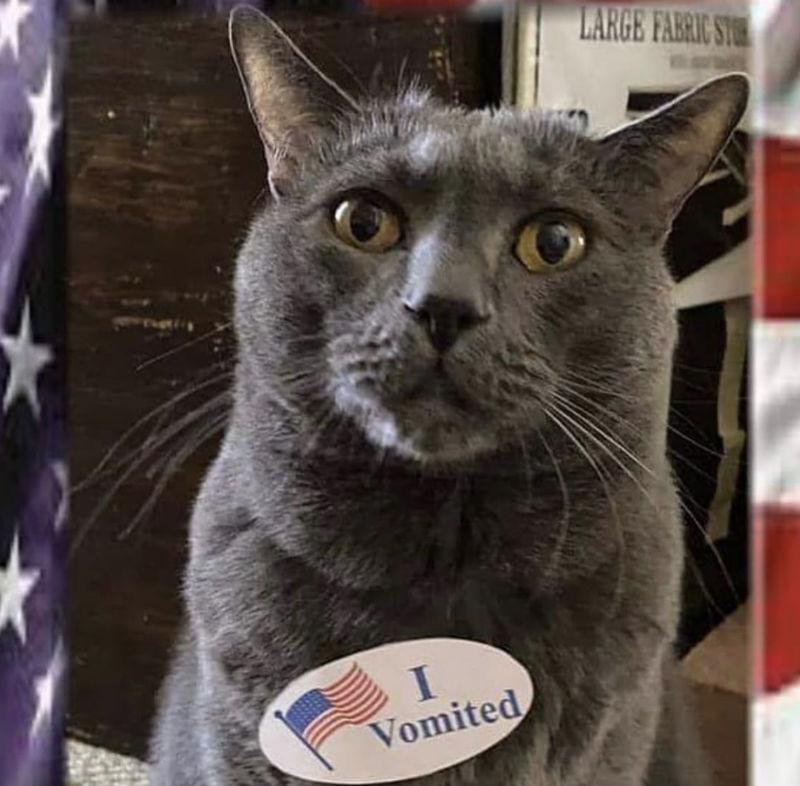 i vomited cat i voted cat meme