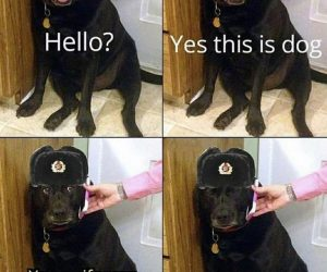 Hello Yes This Is Dog Your Wife Was Launched Into Space – Meme