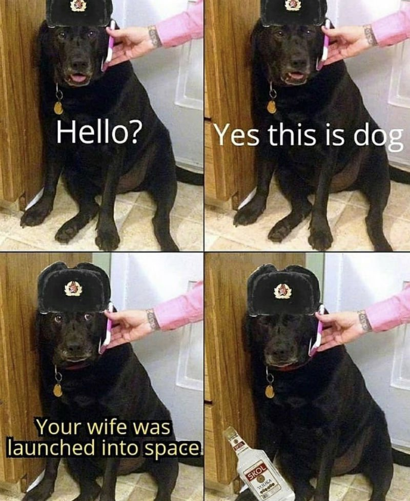 hello yes this is dog