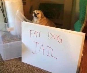 Fat Dog Jail – Meme