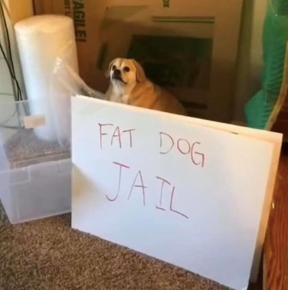 fat dog jail meme